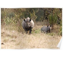Black Rhino with calf.. Poster
