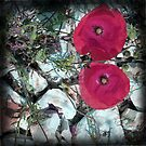Paper poppies by sue mochrie