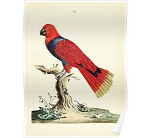 New Illustrations of Zoology Peter Brown 1776 0037 Birds Poster