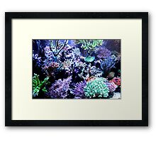 Colorful Coral Framed Print