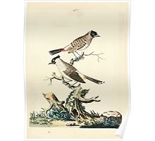 New Illustrations of Zoology Peter Brown 1776 0151 Birds Poster