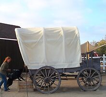 Beautiful carriage by daffodil