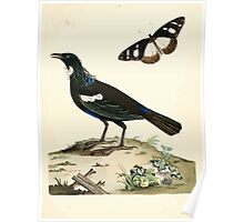 New Illustrations of Zoology Peter Brown 1776 0049 Birds Poster