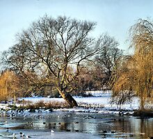 Foot Cray Meadows In Snow HDR by davesphotographics