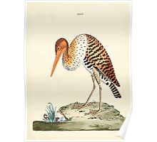 New Illustrations of Zoology Peter Brown 1776 0167 Birds Poster