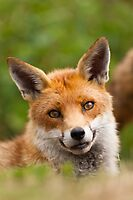 Butter Wouldn't Melt..... by Peter Denness