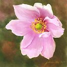 A Pink Anemone  by Joan A Hamilton