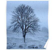 So Cold I'm Blue-Monterosi, Italy Poster