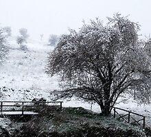 Let it Snow-Monterosi, Italy by Deborah Downes
