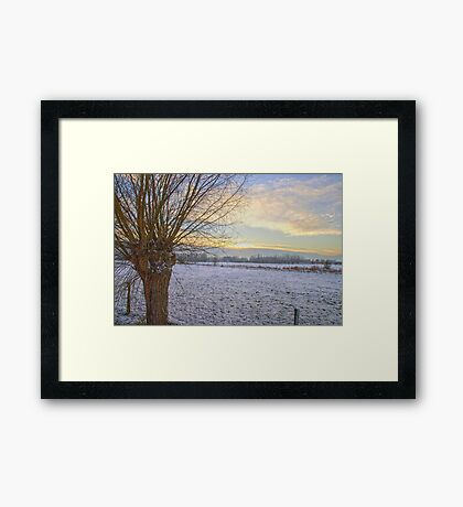 Willow in Flanders Snow Framed Print