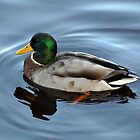 Happy Duck by Bickeringbush