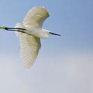 Egret, Vendicari, Sicily by Andrew Jones