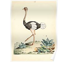 New Illustrations of Zoology Peter Brown 1776 0083 Birds Poster