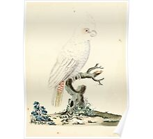 New Illustrations of Zoology Peter Brown 1776 0033 Birds Poster