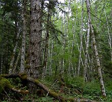 Rainforest Walk in Olympic National Park by CandyApplCrafts