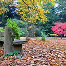 Autumn's Rest by Kevin Cotterell