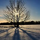 The days of long shadows by Mairead1