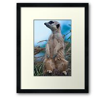 Where are you??? Framed Print