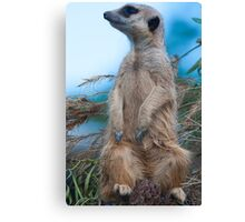 Where are you??? Canvas Print