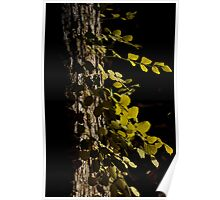 Tree and Vine Poster