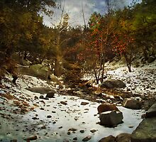 Snow in Madera Canyon by Lucinda Walter