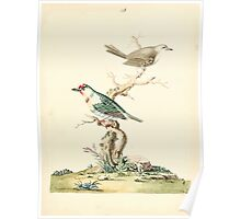 New Illustrations of Zoology Peter Brown 1776 0073 Birds Poster
