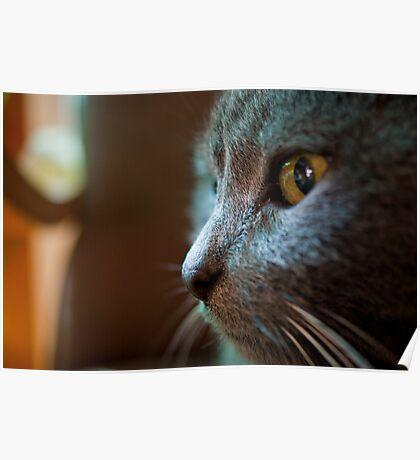 The Feline Persuasion Poster