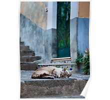Alley Cat Poster