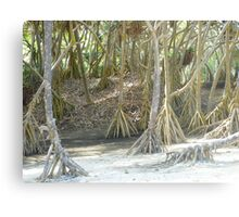 Pandanus Trees - Port Resolution Metal Print