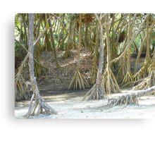 Pandanus Trees - Port Resolution Canvas Print