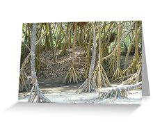 Pandanus Trees - Port Resolution Greeting Card