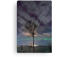 The tree by the arctic shore Canvas Print
