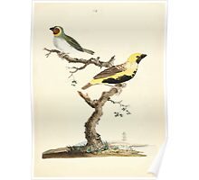 New Illustrations of Zoology Peter Brown 1776 0117 Birds Poster