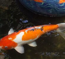 Koi and Glass Ball in Pond by Karen L Ramsey