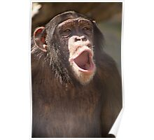"""Chimp Chant"" - chimpanzee getting vocal Poster"