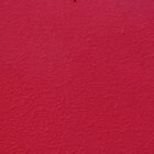 ant on red by TalBright