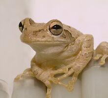 """Amiable Amphibian"" - Cuban Tree Frog by ArtThatSmiles"