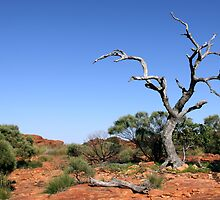 Kings Canyon One Tree Hill by Anthony Judd