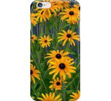 Black Eyed Susans 2 iPhone Case/Skin