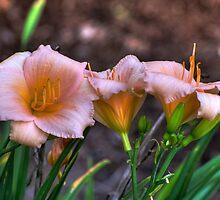 Peach Lillies by Clarkartusa