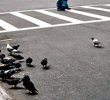 Pigeons and Crosswalk by Maren Misner