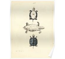 New Illustrations of Zoology Peter Brown 1776 0223 Insects Poster