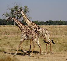 Moseying Along by CanDoNgandu