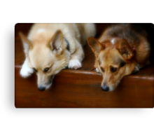 Two Pooped To Participate Canvas Print