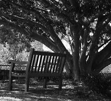 Bench by kraMPhotografie
