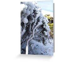 Frozen in time, Mt Wellington, Hobart Greeting Card