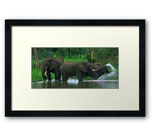 Elephant Shower Framed Print
