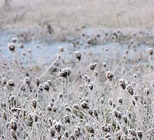 frosted weeds in the wetland by tego53