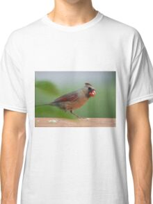 Female cardinal with seed Classic T-Shirt