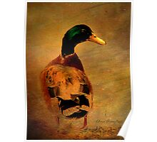 A duck ... Poster